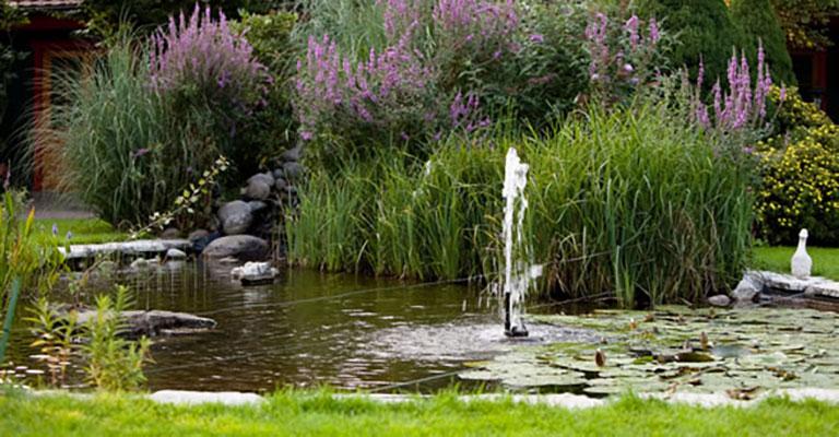 Schöner Teich im Aussenbereich des Saunapark Kamperbrück